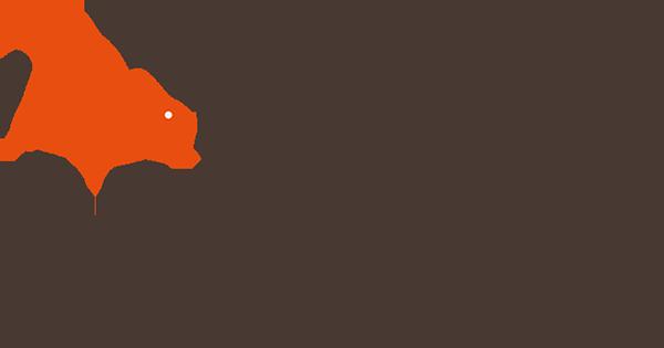 Digital Zoom: web agency Busto A., Gallarate, Legnano, Varese, Como, Milano, Canton Ticino